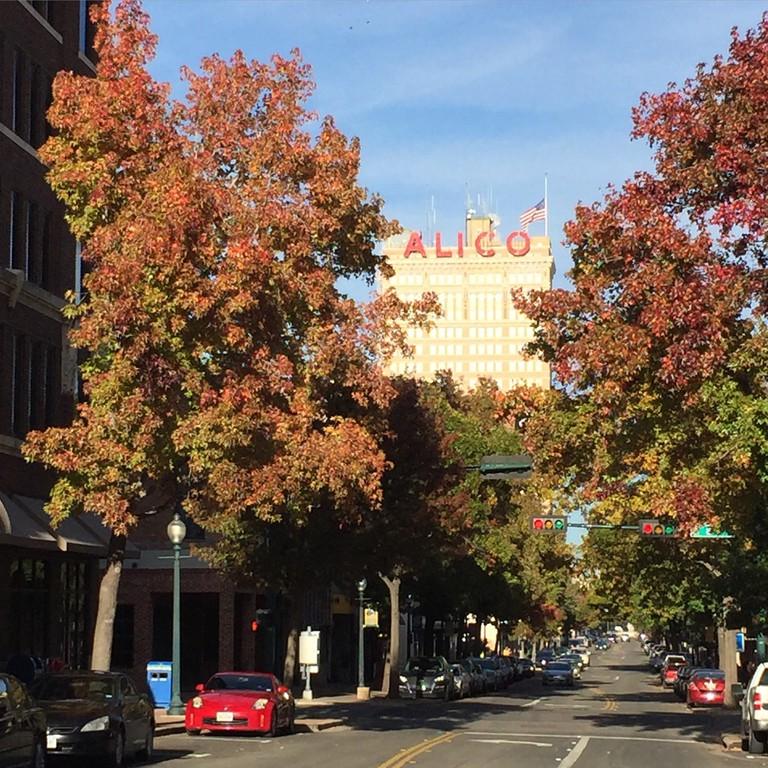 Austin Avenue During The Fall| © Dedra Davis
