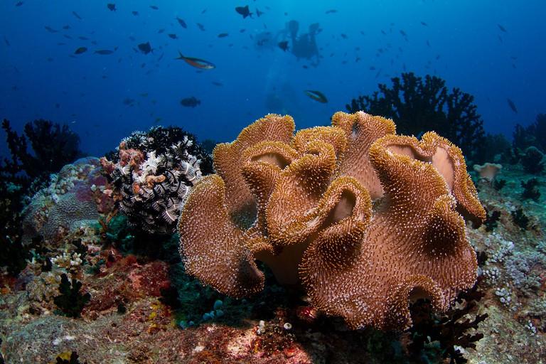 Maldives | © Tchami/WikiCommons
