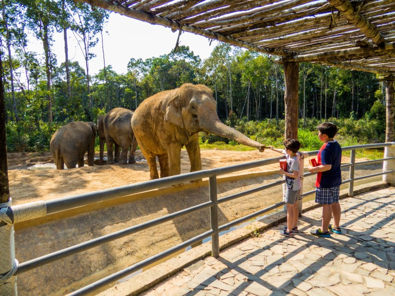 Kids feeding Asian elephant in the Vinpearl Safari zoo park