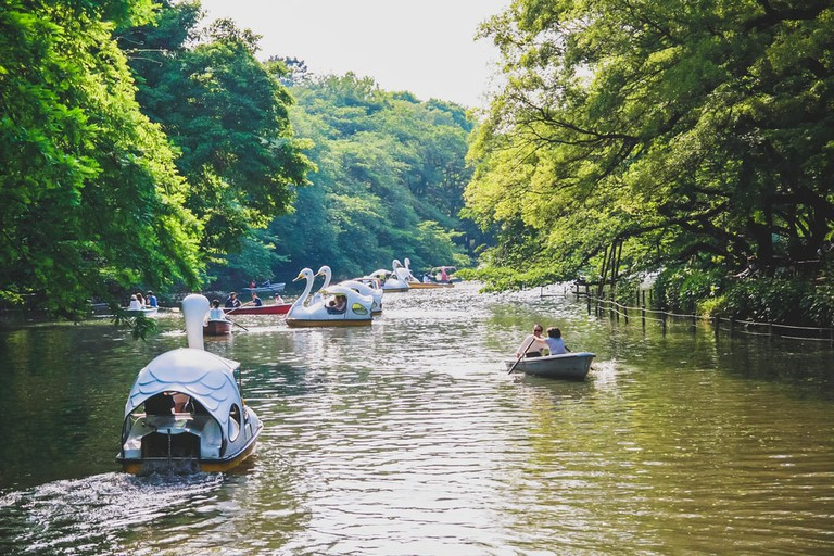 Japanese people paddling boats at Inokashira park, Tokyo