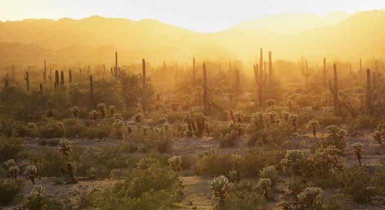 Sonoran Desert   © Bureau of Land Management/Flickr