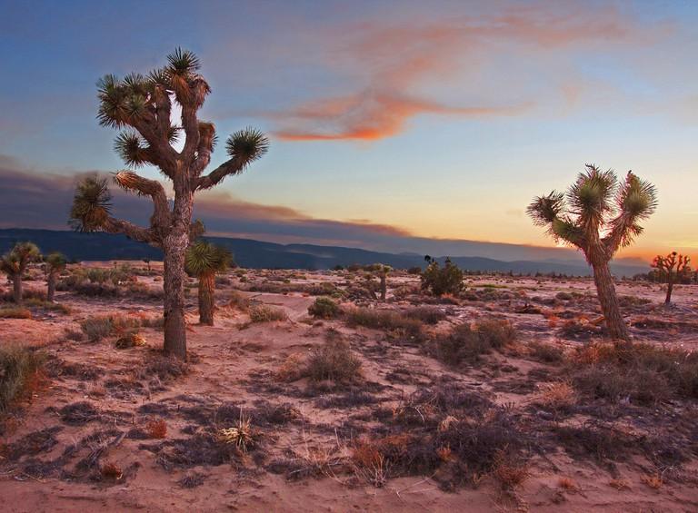 Mojave Desert | ©Rennett Stowe/Flickr
