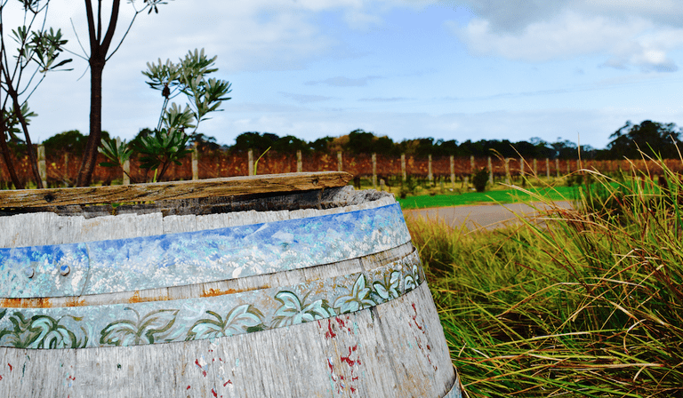 A once beautiful painted wine barrel now withered with the rain. © Jessica Poulter