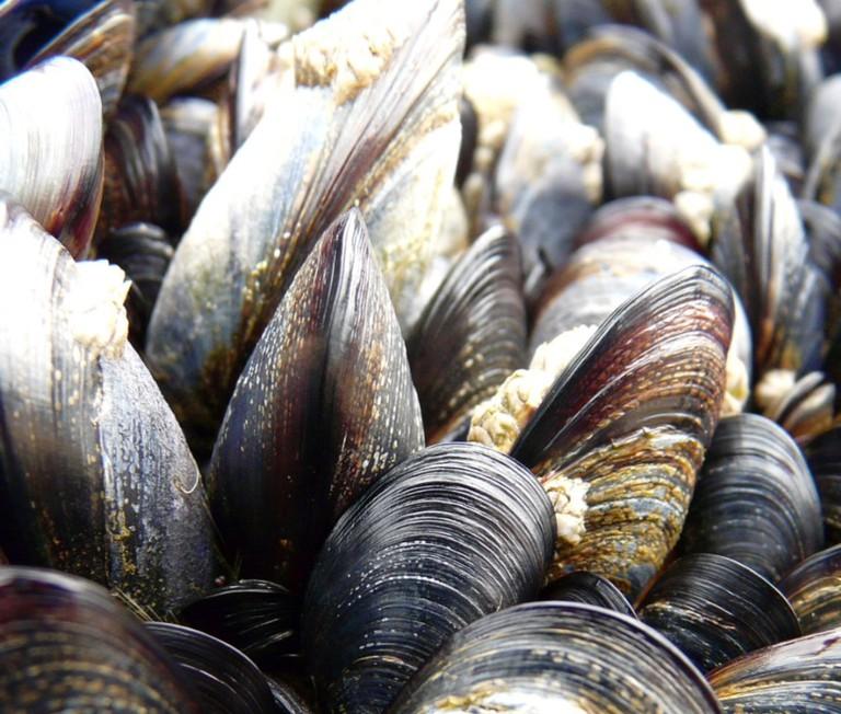 Mussels | Tristan Ferne/Flickr