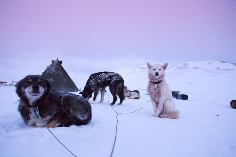 Your friends on Svalbard