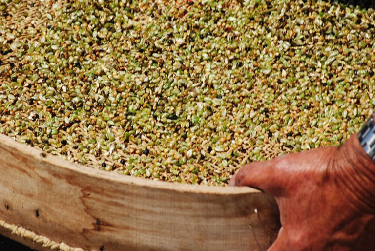 Freekeh, the green wheat of the Middle East
