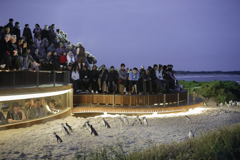 Phillip Island Nature Park, Phillip Island, VIC | Courtesy of Phillip Island Nature Park © Warren Reed