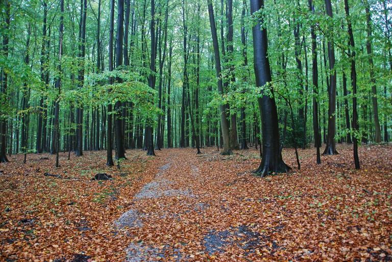 Parc de Tervuren, Brussels / © Stephane Mignon/Flickr