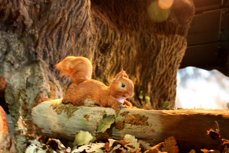 Squirrel Nutkin at the Beatrix Potter museum in Bowness © Ann Lee/Flickr