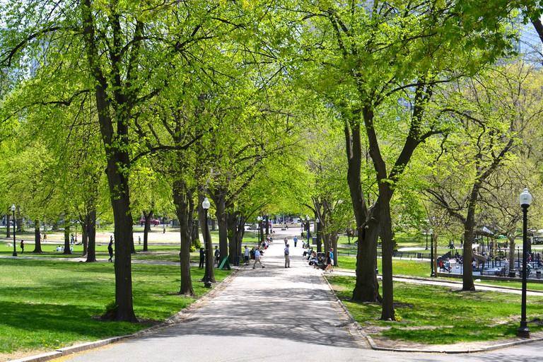Spring in Boston Common