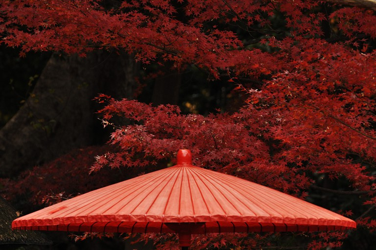 Red maple leaves of fall at Koishikawa Koraku-en | © Kanegen/Flickr