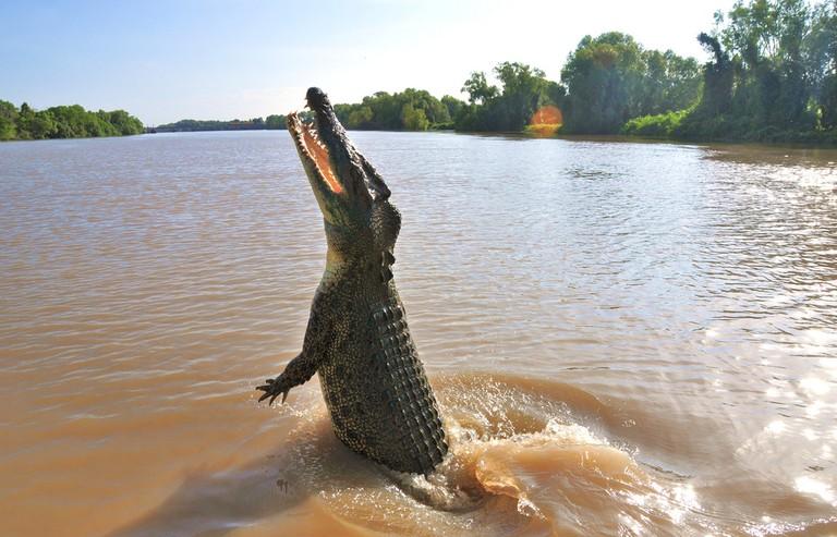 Saltwater Crocodile | © thinboyfatter / Flickr