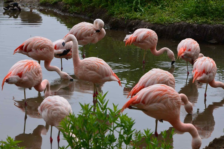 Exotic bird such as the flamingo find a Belgian home in Pairi Daiza's grand aviary | © Stephane Mignon/Flickr
