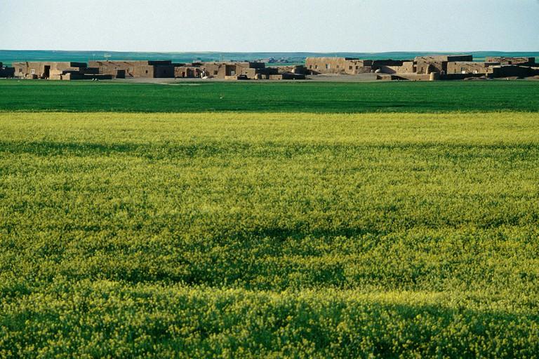Al Zedi 1995