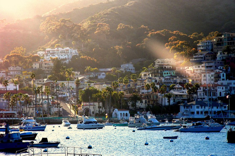 Catalina © ThuyPham/Flickr.com