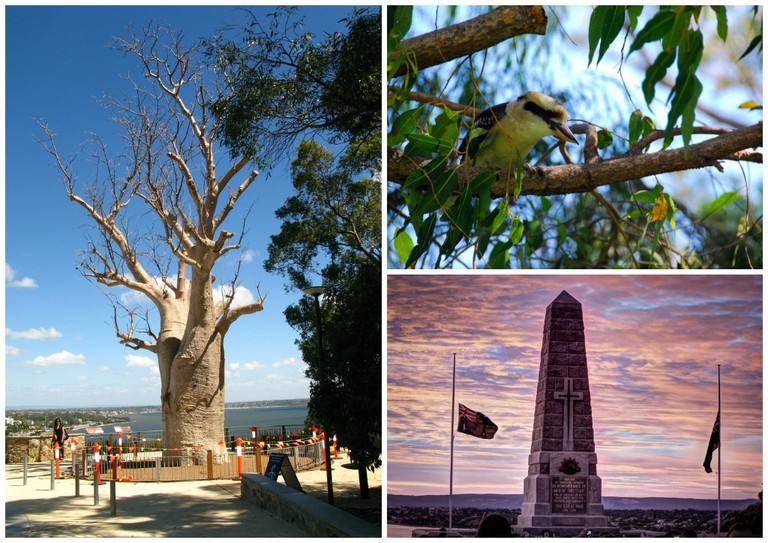 Boab Tree | © Miran Rijavec / Flickr // Kookaburra at Kings Park | © Robert Young / Flickr // ANZAC morning at the Kings Park State War Memorial | © Steve Marr / Flickr