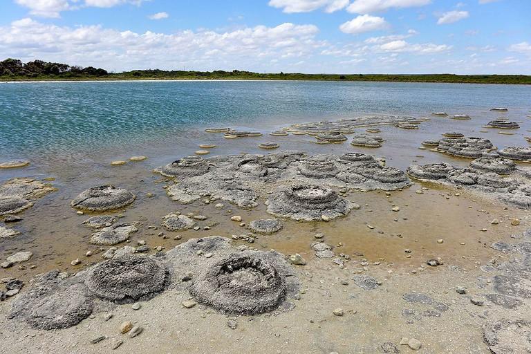 Stromatolites, Lake Thetis | © Bahnfrend / WikiCommons