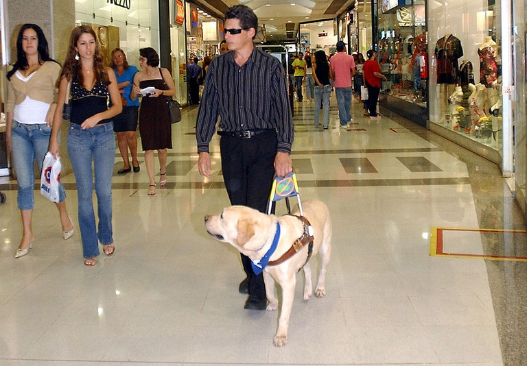 A guide dog assists a blind man in Brasilia