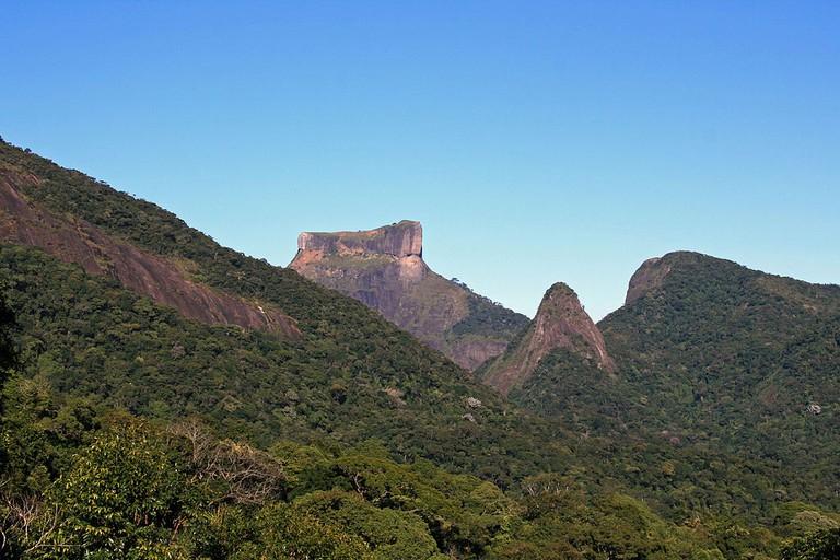 The Tijuca rainforest in Rio de Janerio