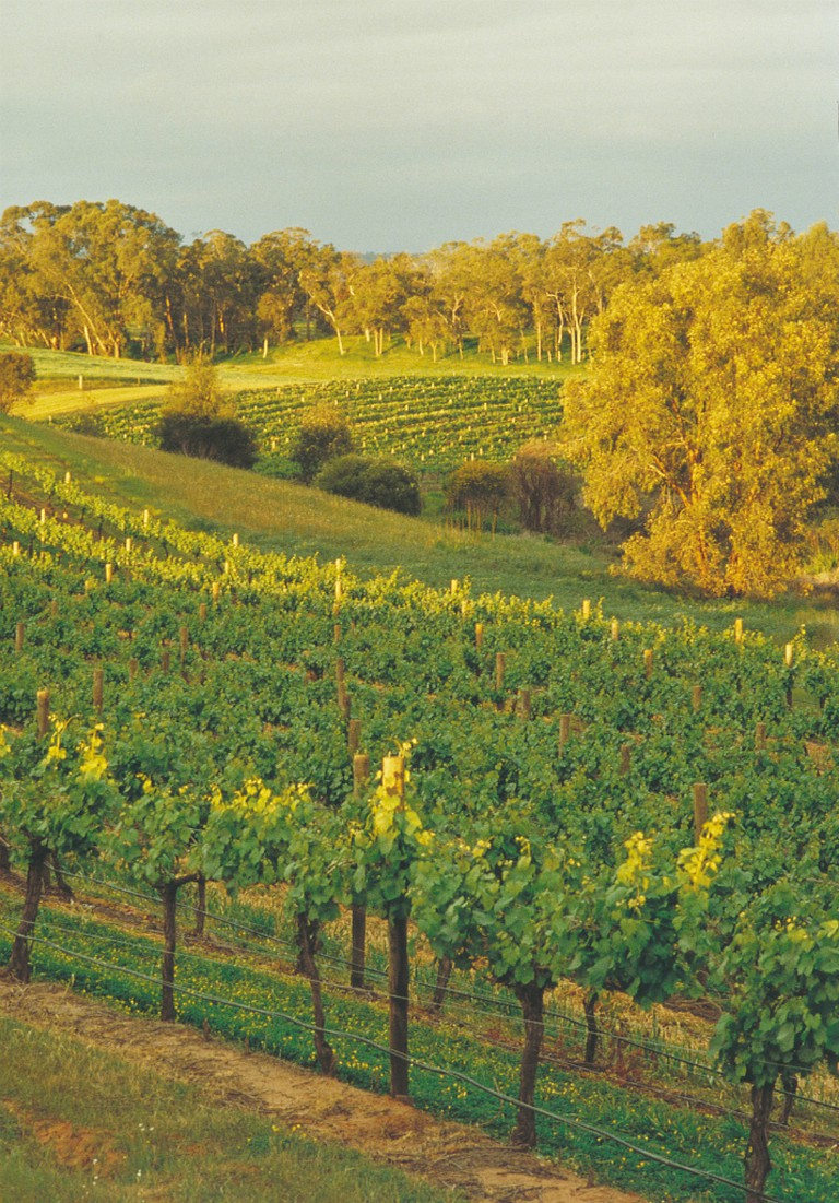 Swan Valley vineyards | Courtesy of Tourism Western Australia