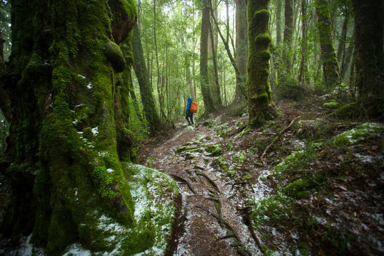 Cradle Mountain Huts Walk | Courtesy of Great Walks of Australia