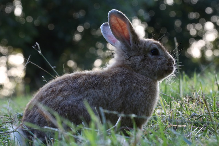 Large flocks of wild rabbits call Diemerpark home