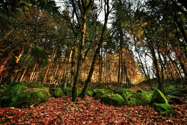 Trees in Forest Park, Portland, Oregon | © Adamneil/Good Free Photos