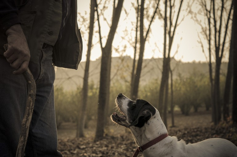 Old man with his dog searching truffle in a forest