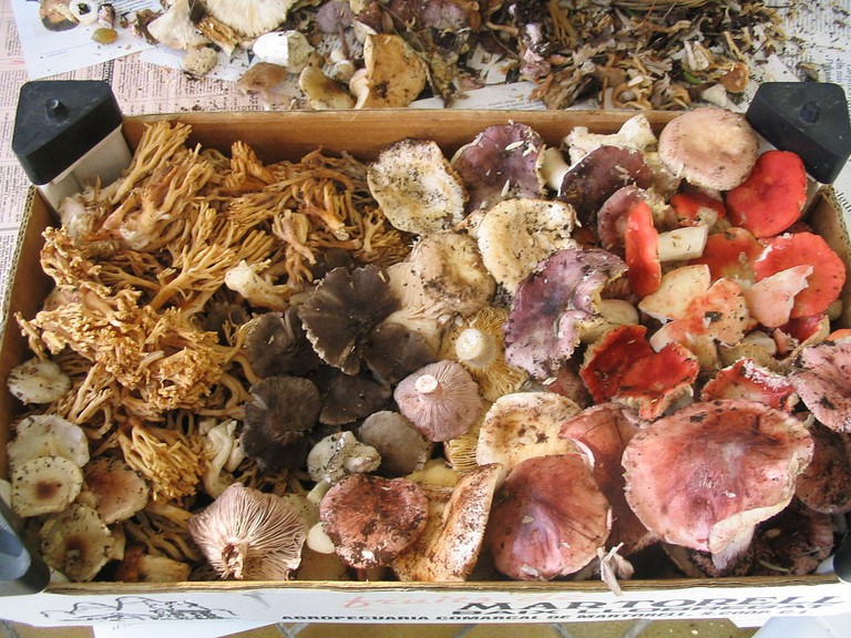 Some of the mushrooms to be found in Catalunya | © Jordiferrer