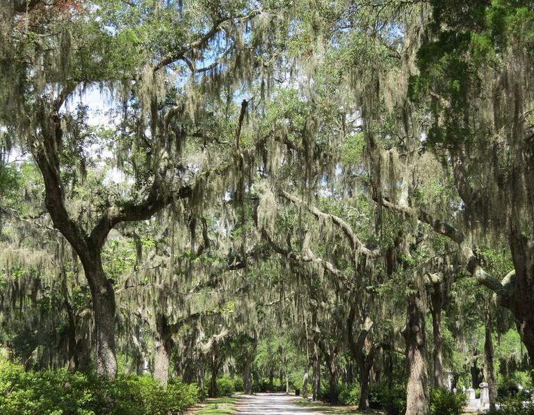 Live Oak Lane Bonaventure Cemetery Savannah GA | © Sandy Auriene Sullivan/Flickr