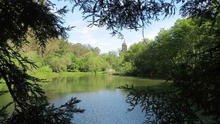 Tilden Park © Chickmarkley/Wikipedia