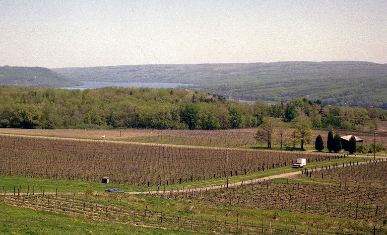 Vineyard at Cayuga Lake, one of the Finger Lakes in upstate NY | © Phillip Capper, Wikipedia Commons
