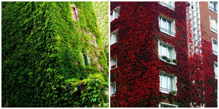 An old-school living wall in Paris │© Mon OEII Autumn foliage on an old-school living wall in Paris │© Thomas Claveirole