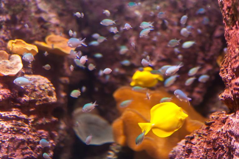 Fish at the Paris Aquarium │