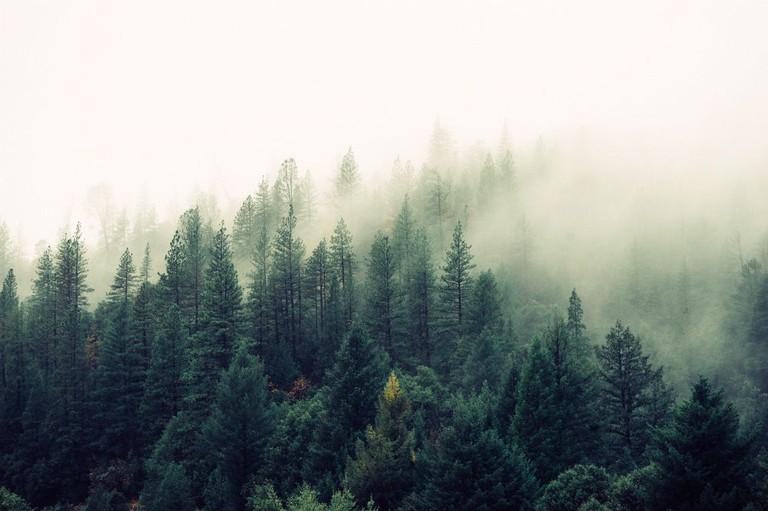 Forest | © jaymantri.com/Pexels