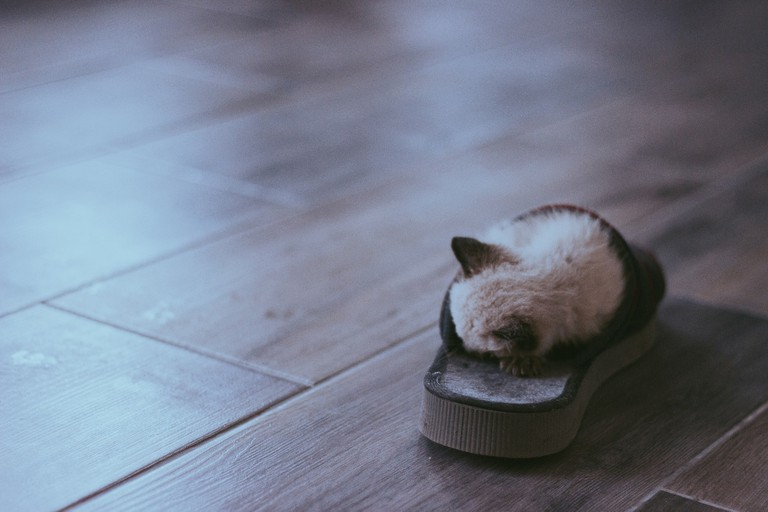 A tiny kitten snoozes in a slipper