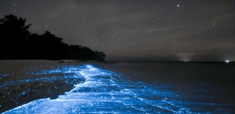 Screenshot of Bioluminescent Bay, Puerto Rico Beautiful Places – Amazing places
