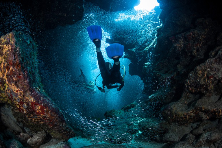 Explores the cracks, crevices and holes in a coral reef on the island of Grand Cayman