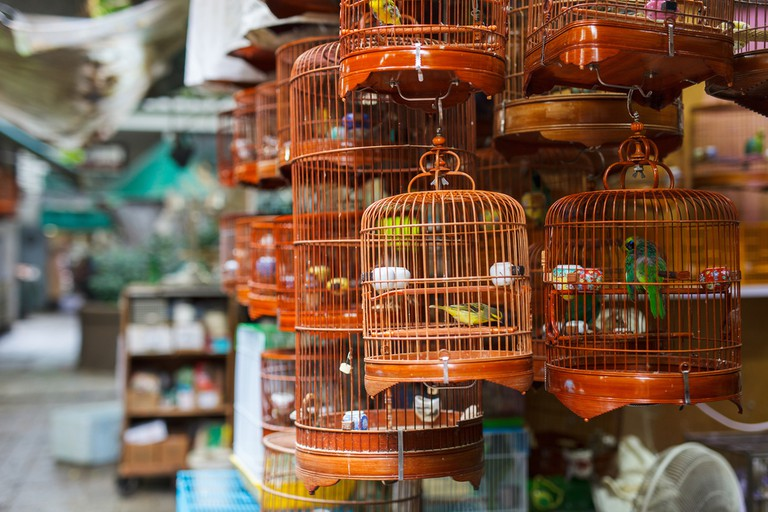 Birds in cages for sale at Birds market, Kowloon Hong Kong, popular tourist destination