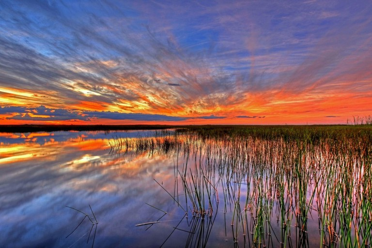 Everglades, FL | Public Domain/Pixabay