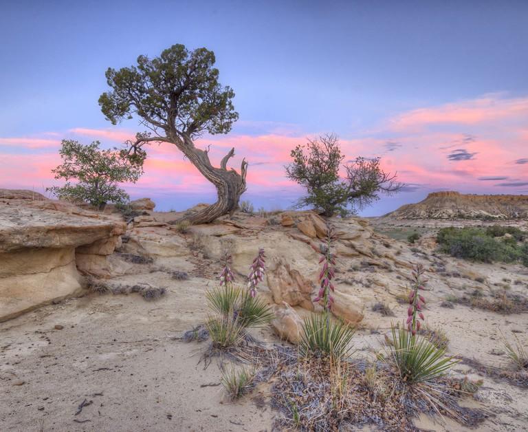 Sunset in Ojito Wilderness, NM | © John Fowler/Wikicommons