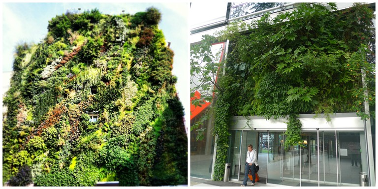 The living wall at Sentier-Bonne Nouvelle │© Florent Darrault The living wall at the Fondation Cartier │© Jean-Louis Zimmermann