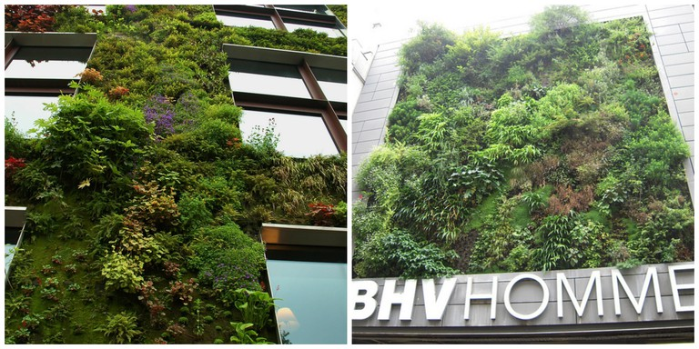 The living wall at the Musée du quai Branly │© Isamiga76 The living wall at BHV Homme │© Patrick janicek