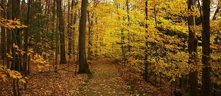 Yellow Forest | © Wikipedia Commons