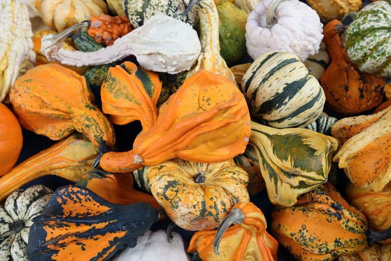 Pumpkins | © Flickr/br1dotcom
