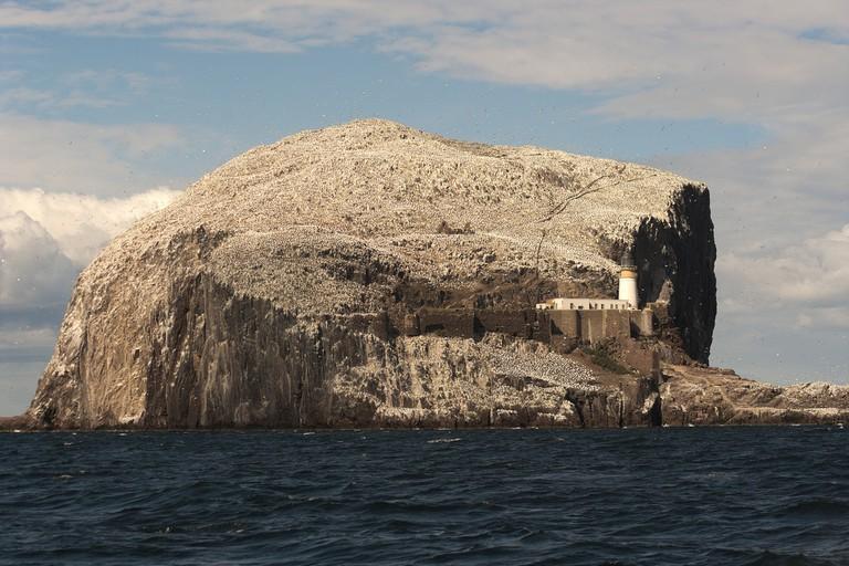 The Bass Rock | © Nicola Romanò/Flickr