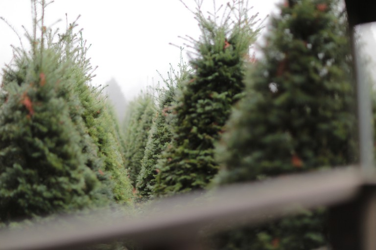 Christmas Tree Maze | © Parker Knight/Flickr