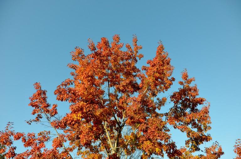 Rancho San Antonio Preserve © iris/Flickr