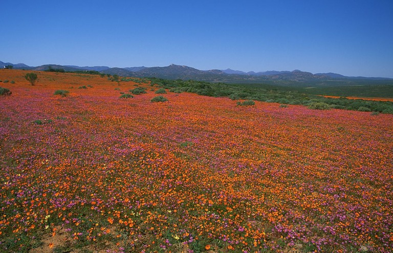 Namaqualand National Park, Northern Cape