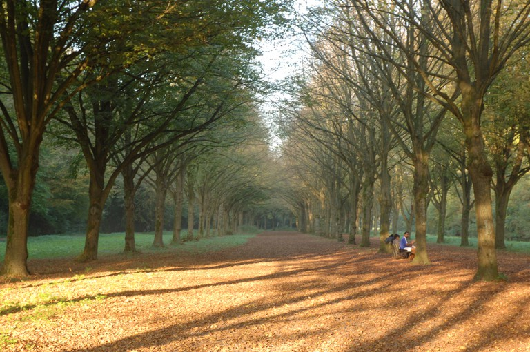 Amsterdamse Bos during Autumn